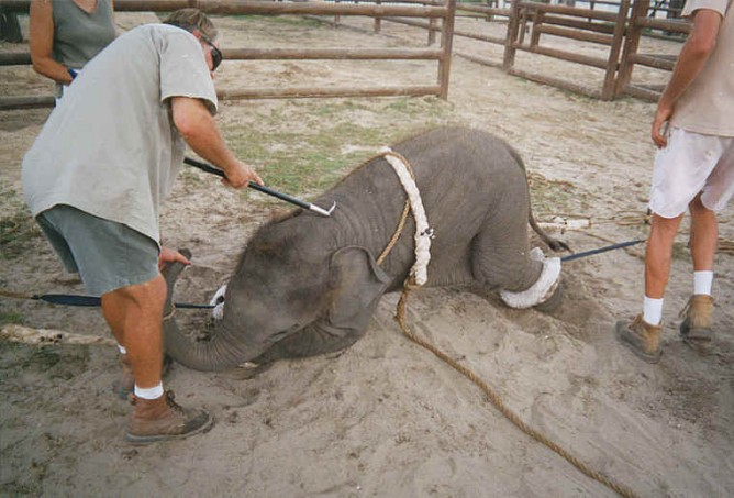 elephant-ent-17