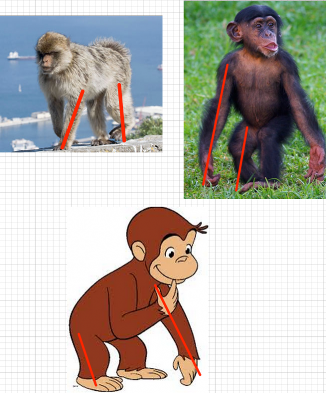 Barbary macaque curious george
